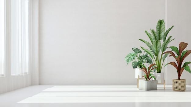 Stanza vuota bianca con pianta e luce solare Foto Premium