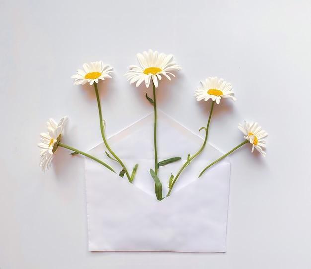 Busta bianca con margherite bianche all'interno su sfondo bianco. modello per newsletter e altri progetti di posta.