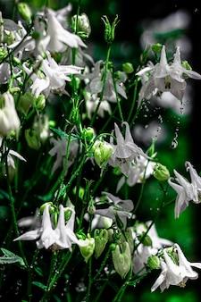 Fiori bianchi su sfondo nero macro diversi fiori a fuoco