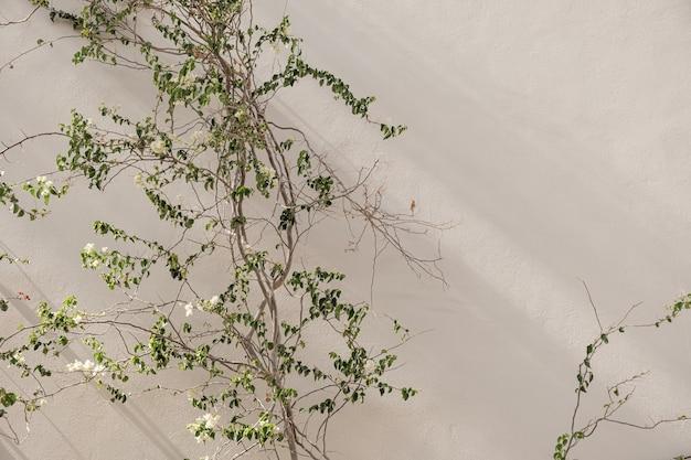 Ramo di fiori bianchi, foglie sul muro di cemento beige neutro.