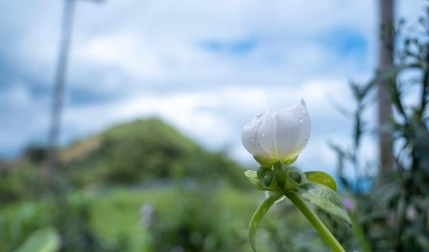 Fiori bianchi piantati in montagna