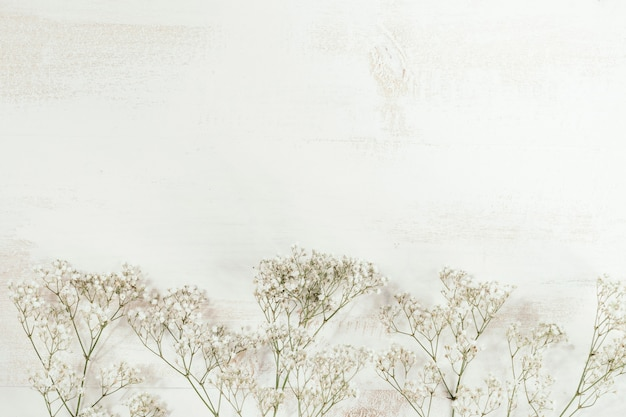 Fiori bianchi con spazio bianco della copia