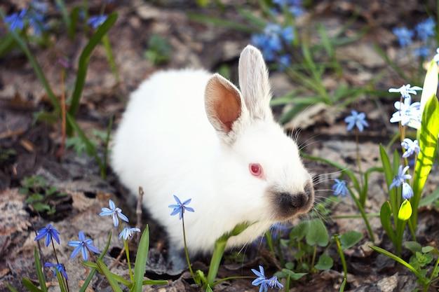 Coniglietto bianco lanuginoso nel prato dei fiori blu. un piccolo coniglio decorativo va su erba verde all'aperto