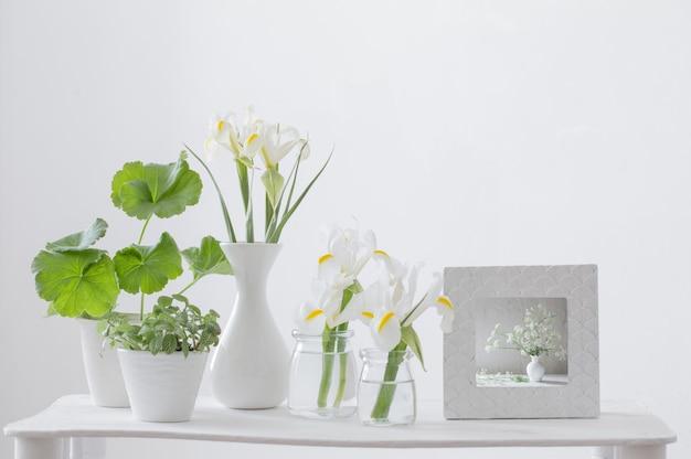 Cornice bianca, piante verdi e fiori primaverili sullo scaffale sul muro bianco