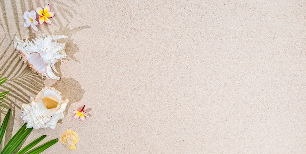 Fiori di frangipani bianchi e foglie di palma verdi con conchiglie bianche su sfondo sabbia