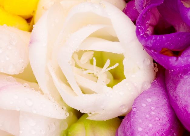 Germoglio bianco di fresia all'interno del mazzo variopinto