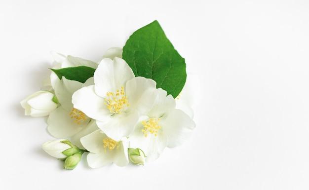 Fiori di gelsomino freschi bianchi su sfondo bianco