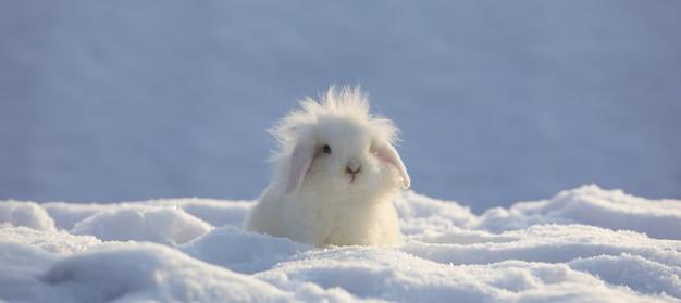 Coniglio birichino divertente bianco nella neve