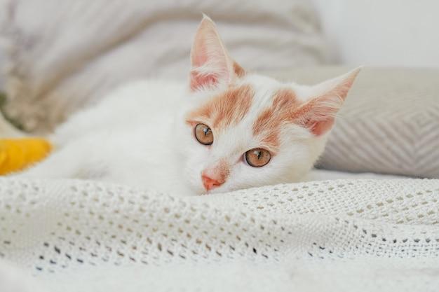 Il gatto bianco e zenzero 3-4 mesi giace su una coperta leggera. gattino con piede, bendato con benda gialla