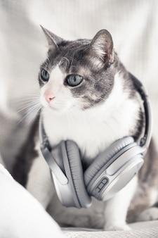 Gatto domestico adulto grigio bianco con le cuffie