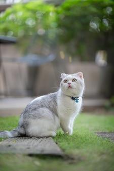 Gatto bianco e grigio seduto sull'erba