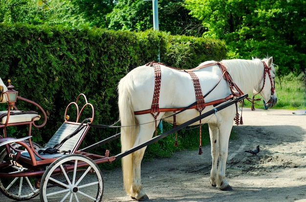 Cavallo bianco e carrozza parte nel parco