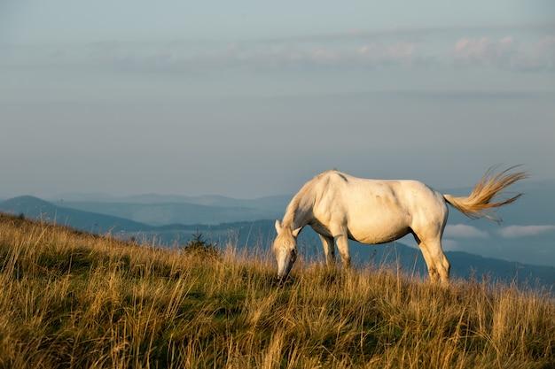 Cavallo bianco sulle cime delle montagne