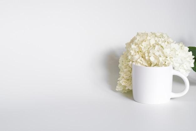 Ortensia bianca in una tazza bianca su sfondo bianco
