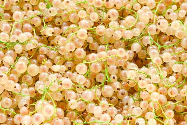 Sfondo bianco ribes succoso. vista dall'alto. cibo salutare.