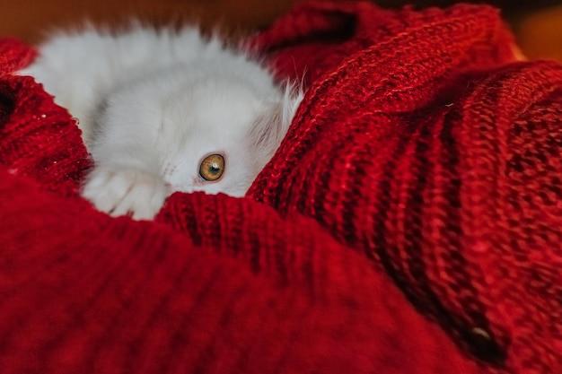 Gattino bianco che gioca sul letto