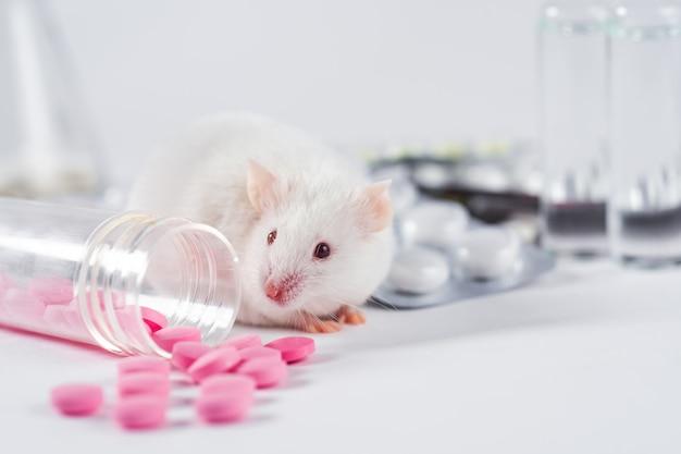 Topo sperimentale di laboratorio bianco si siede sulle pillole. concetto di manipolazione medica sugli animali, esperimento di vaccino, test di farmaci, vitamine.