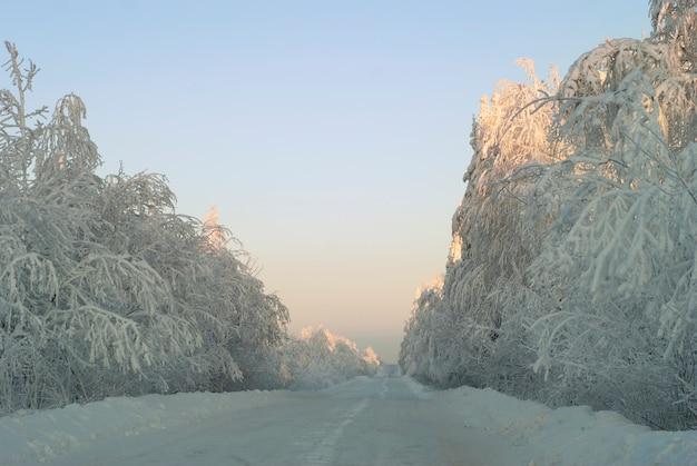 Strada ghiacciata invernale del paesaggio bianco attraverso la foresta innevata