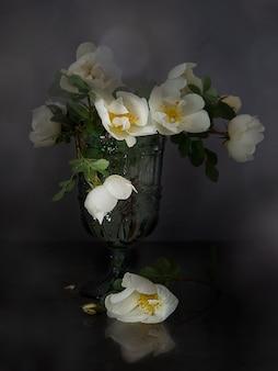 Grandi fiori bianchi di rosa canina in un bicchiere su uno sfondo scuro. copia spazio.
