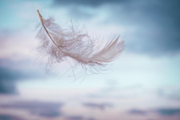 Piuma bianca leggera, volando su sfondo di cielo rosa-blu con nuvole