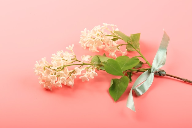 Lillà bianco legato con un nastro verde su sfondo rosa