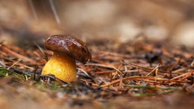 Fungo bianco che cresce nella foresta, foto usando la pila di messa a fuoco, altissima qualità