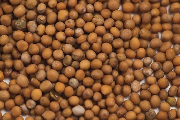 Semi di senape bianca per sfondo di germinazione per desing.