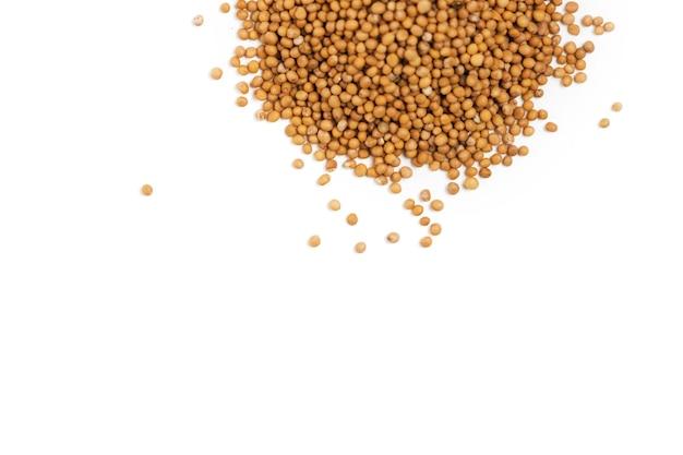 Semi di senape bianca per la germinazione nel mucchio isolato su una superficie bianca.