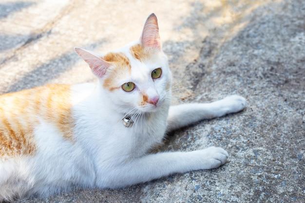 Un gatto bianco arancio sul pavimento di cemento