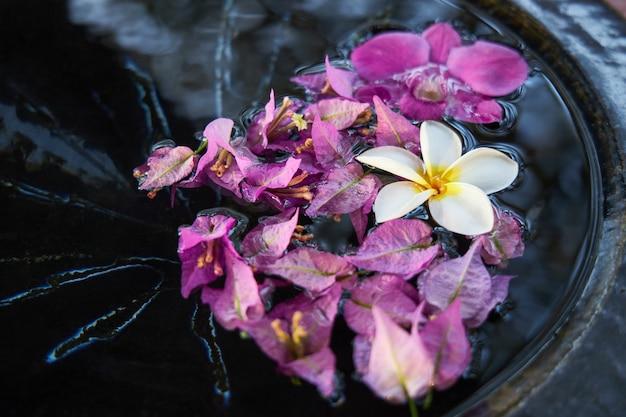 Il fiore bianco dell'orchidea ed i petali rosa galleggiano in una ciotola di acqua come decorazione