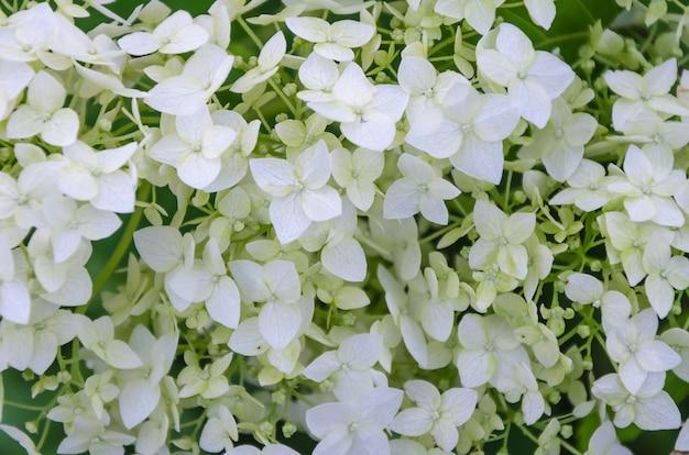 Fondo decorativo dei fiori del libro bianco
