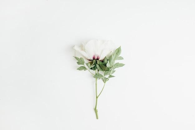 Fiore di peonia bianca su sfondo bianco. disposizione piatta, vista dall'alto