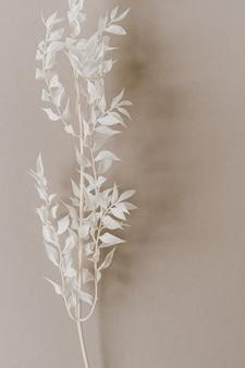Ramo di pianta bianco su beige pastello neutro. vista dall'alto