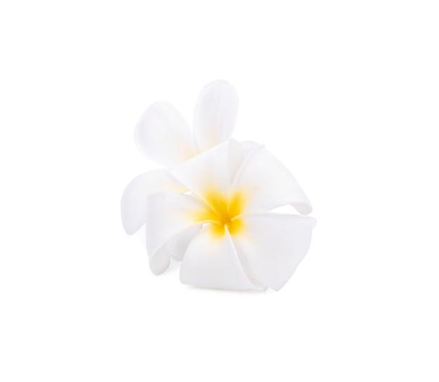 Fiori di plumeria bianchi isolati su priorità bassa bianca.