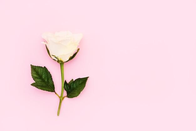Rosa bianca su rosa con copia spazio