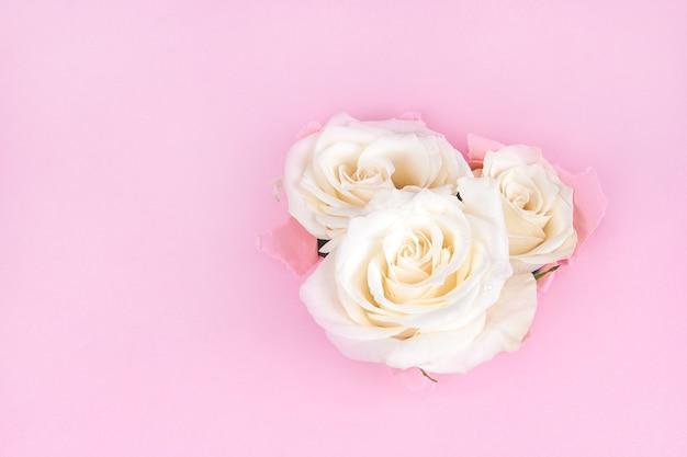 Rose bianche attraverso carta strappata su uno sfondo rosa
