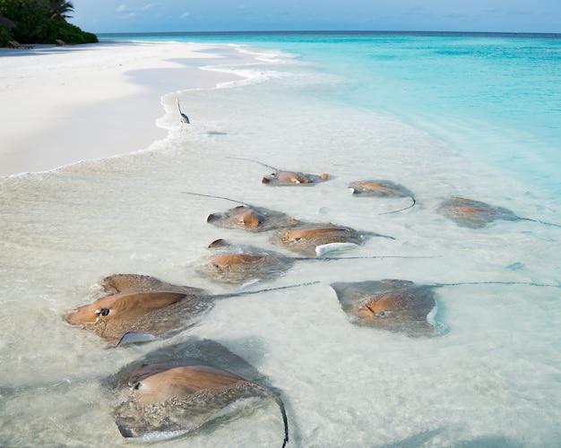 Spiaggia di sabbia bianca nelle splendide maldive con gruppi di razze