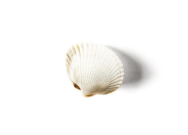 Conchiglia bianca isolata su sfondo bianco