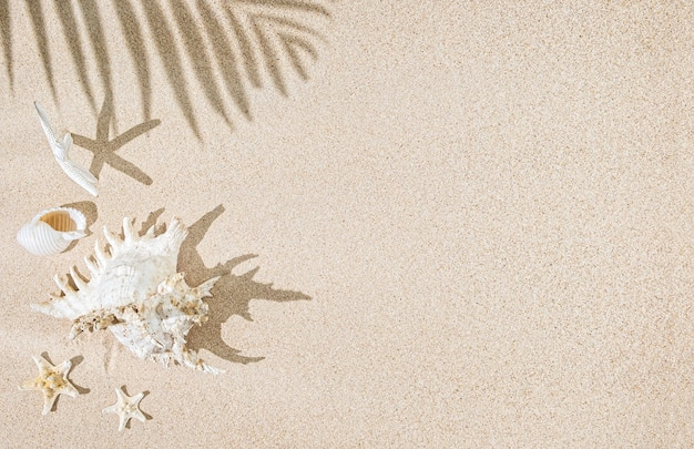 Conchiglie di mare bianco e stelle marine sulla sabbia e ombre di palme. sfondo tropicale