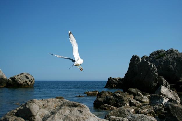 Il gabbiano bianco vola sulle rocce di una spiaggia di pietra del mar nero