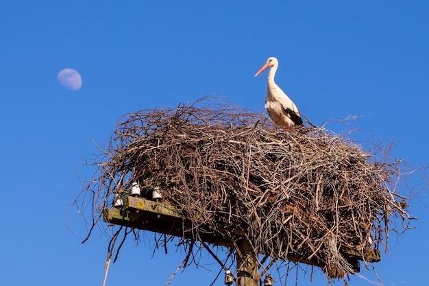 Cicogna bianca in un nido in primavera contro un cielo blu chiaro