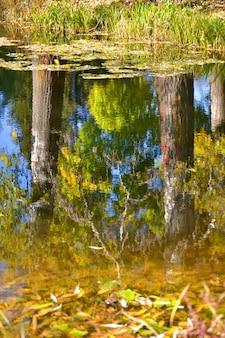 Pioppo tronco bianco e cielo azzurro riflessi nell'acqua autunnale