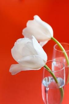 Tulipani bianchi su sfondo rosso da vicino