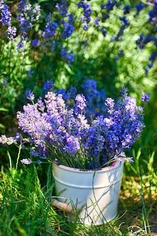 Vaso bianco con bouquet di lavanda su sfondo campo di lavanda