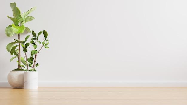 Stanza vuota del muro bianco con piante su un pavimento, rendering 3d
