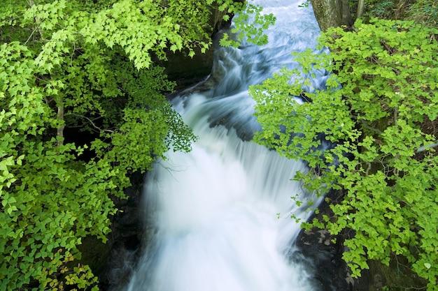 Flusso di acqua bianca sotto i rami verdi estivi, presa sulla cascata naturale della cascata di ryuzu, nikko, giappone