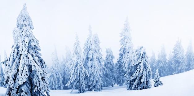 Alberi di pelliccia bianca invernale ricoperti di neve nella foresta su spazio diurno fumo bianco