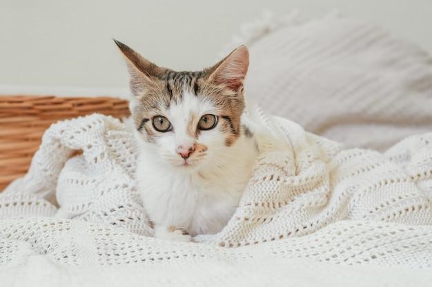 Il gatto bianco con strisce grigie 3-4 mesi giace in una coperta a maglia bianca accanto al cesto di vimini e guarda di lato. gattino non di razza