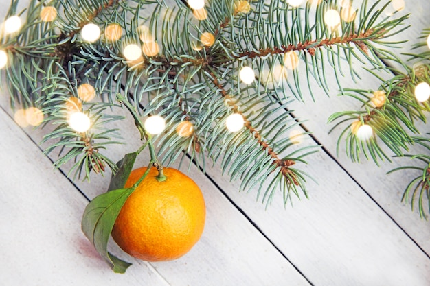 Su uno sfondo di legno bianco giacciono mandarini arancioni maturi con foglie e rami di abete di conifere