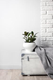Scatola di legno bianca con una giovane pianta di gomma in un vaso di fiori bianchi e una coperta in morbido pile grigio